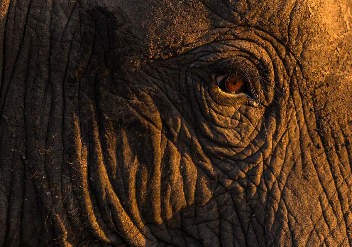The Elephants eye